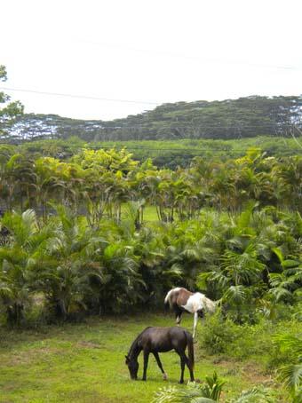 20090724horse1.jpg