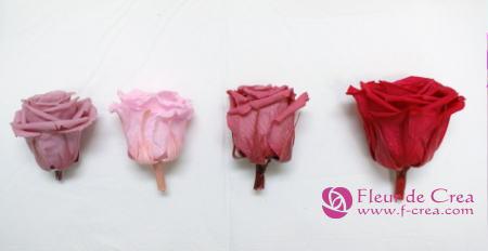 開花比べ0902_02