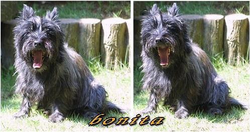 bonita10620.jpg