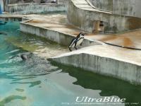 20090613_東山ペンギン