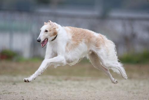 01 飛行犬・カイザー