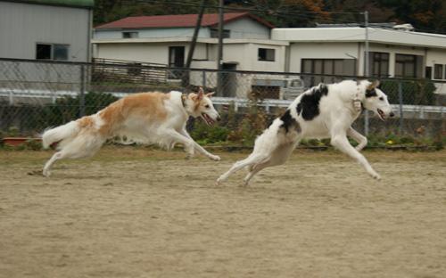 08 カイザー&愛理 08