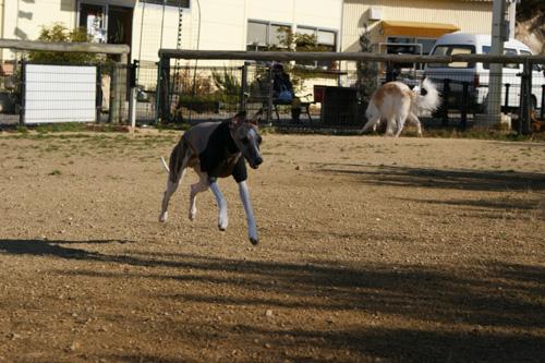 03 飛行犬!!