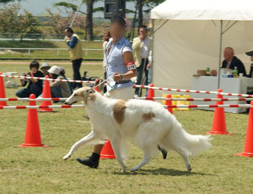 高松中央全犬種クラブ展 03