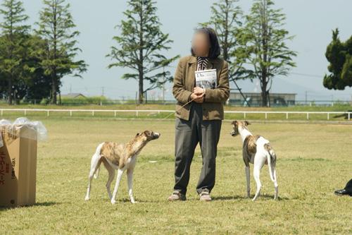 高松中央全犬種クラブ展 04