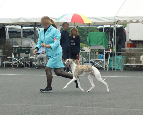 02 1日目ブリード戦2