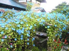 2008-9川めぐ~3s_b4008-400
