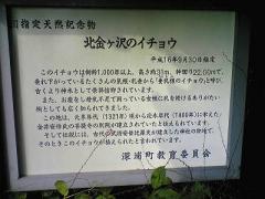 08大銀杏2ds_400