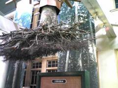2008-9森林博物館2s_b4008-400