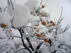 初雪3_400