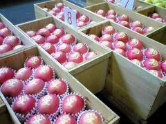 りんご品評会9_400