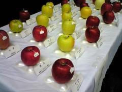 りんご品評会31_400