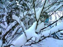 残雪_400