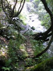 川島の滝18_512