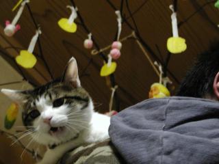 猫とまゆ玉 1
