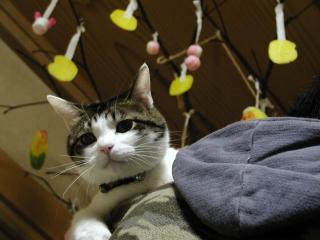 猫とまゆ玉 2