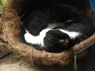 植木鉢再利用ベッド