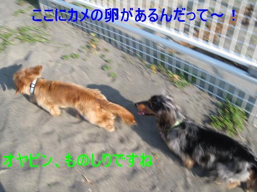コピー ~ IMG_3312