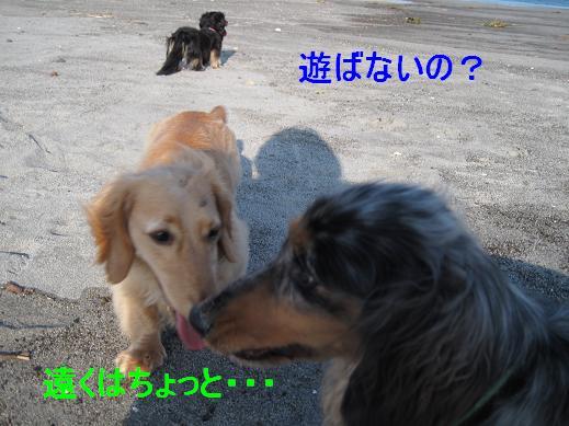 コピー ~ IMG_3318
