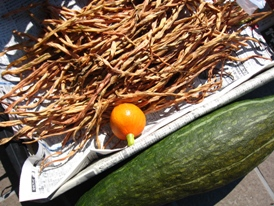 2009重野菜2
