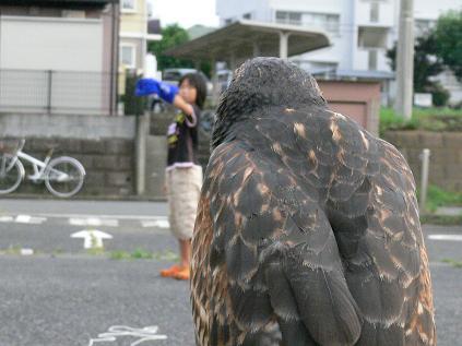 朱雀の目から