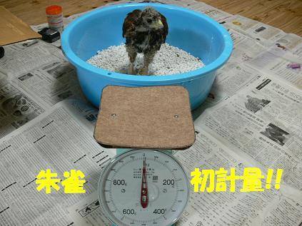 朱雀初計量!!