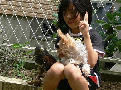 娘と鷹と犬