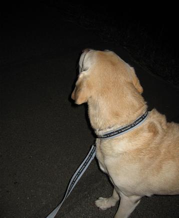 200810083夜の散歩