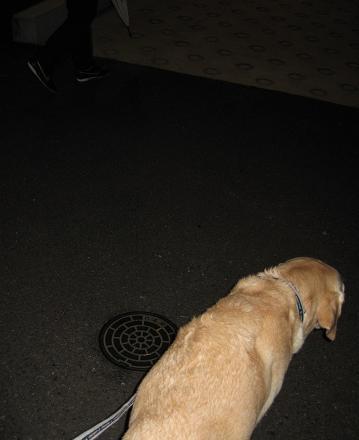 200810089夜の散歩