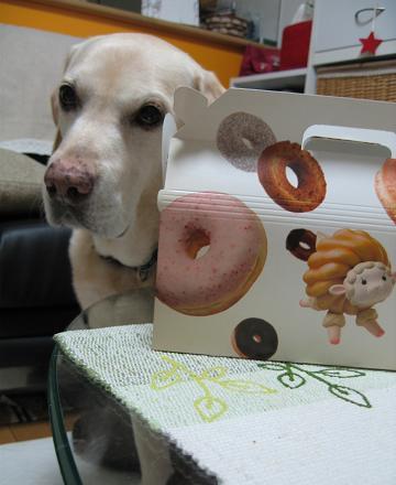 200810142ドーナツの犬