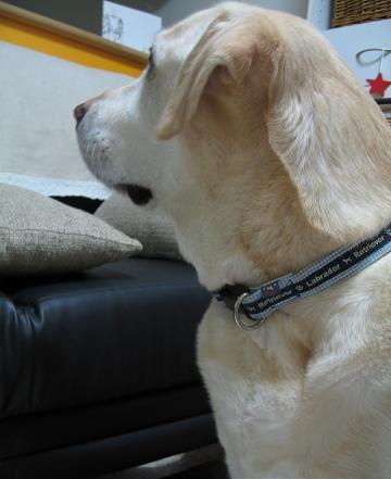 200810144ドーナツの犬