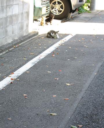 200811131猫
