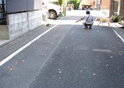 200811132猫