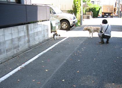 200811133猫