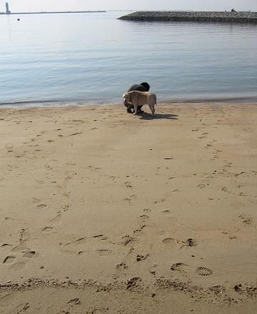 2008127海で見つけたもの
