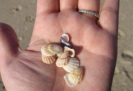 20081273海で見つけたもの