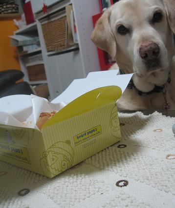 200903153スイーツと犬