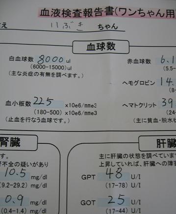200905094獣医さん