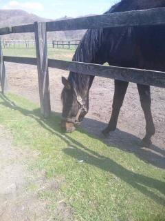 やっぱり、草刈り馬ロマン♪