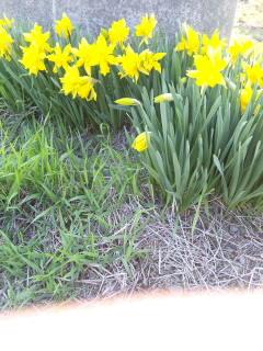 荒木育成牧場の花