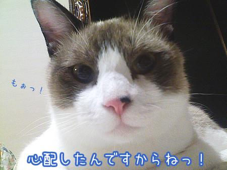 20081103-5.jpg