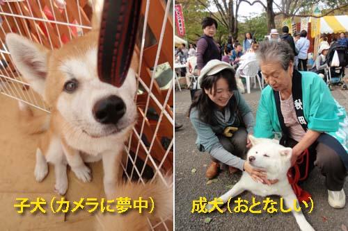 akiadog_20091101004940.jpg