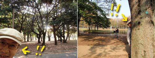 yoyogipark.jpg
