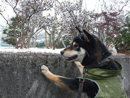 肉球も霜焼けになる?(2008/1/23)