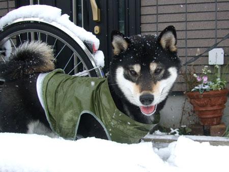 ぶん太と雪合戦(2008/2/3)