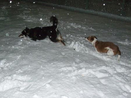 雪のケーキ(2008/2/9)