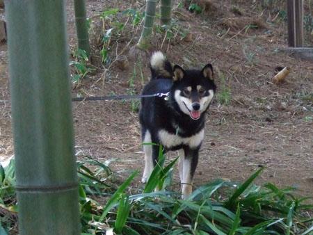 竹には白黒(2008/3/9)