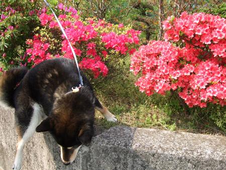 2才のバースデーケーキ(2008/4/23)