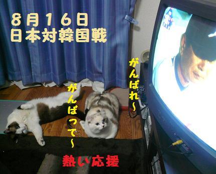 P1040321.jpg