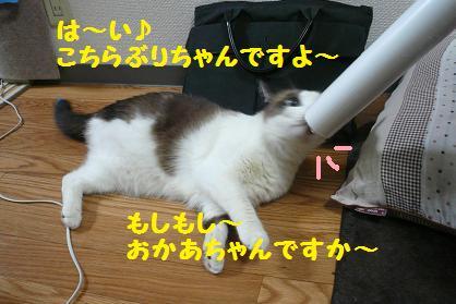 P1040769.jpg